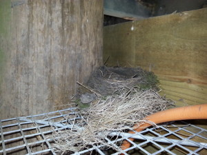 Nesting box with a camera to see how the baby birds hatch and develop into adult birds.