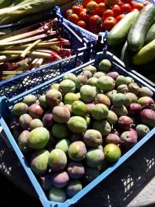 harvest plums