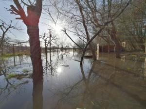 flooded orchard 2