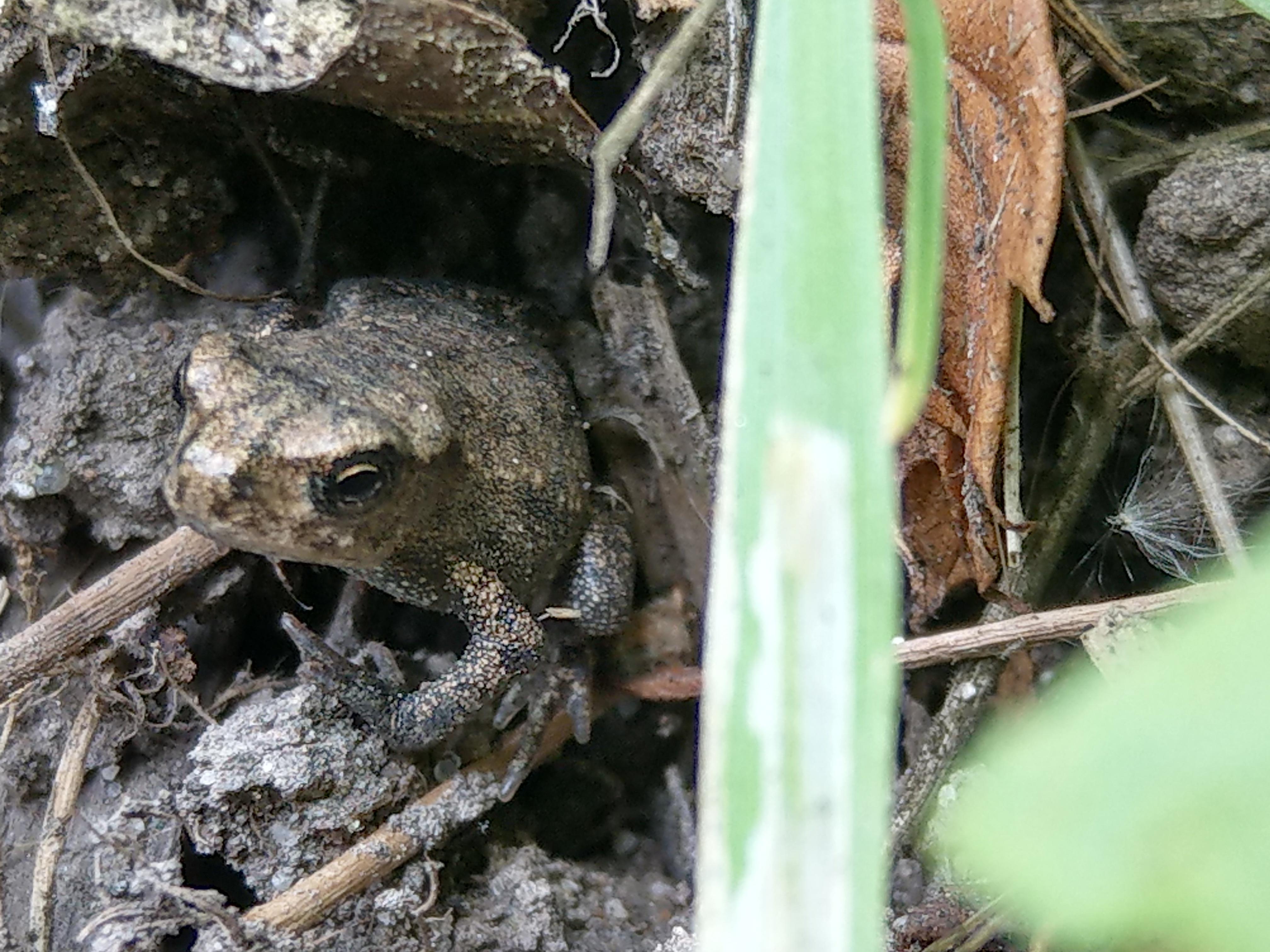 Toad- tiny
