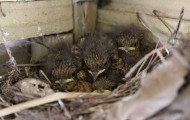 NEWS – Nesting excitement hits Green Fingers